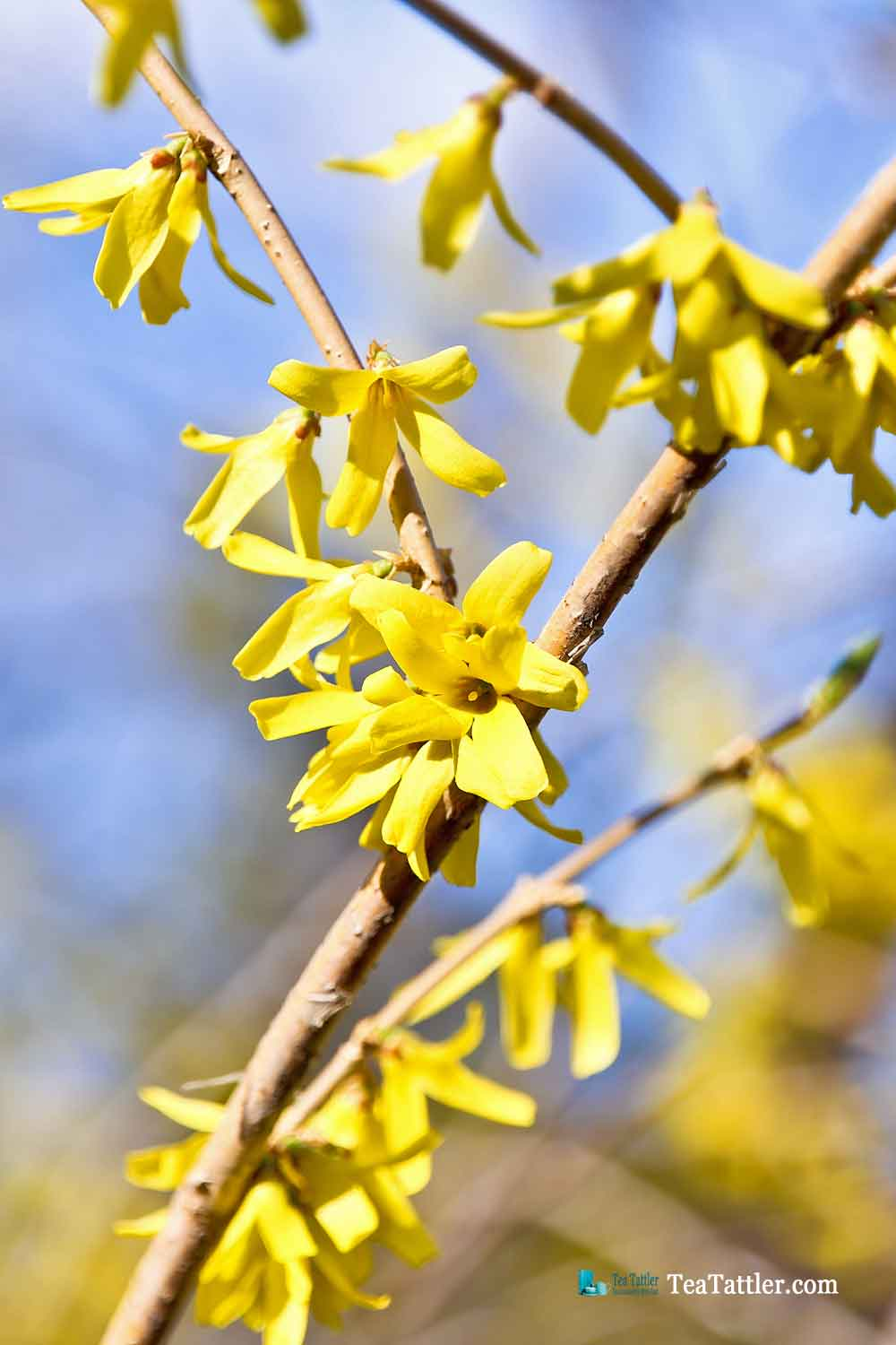 The wonder of Spring in the Prairie with early spring flowers, emerging buds on the trees, and chirping birds. So much to look forward to. | TeaTattler.com #springtime